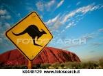 canguro-roccia_~k0448129.jpg